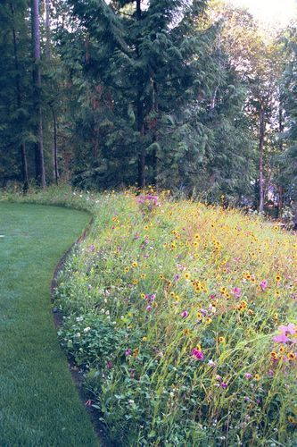 Photo of wildflowers, wildflowers everywhere #wildflowergarden,  #wildflowergarden #wildf…