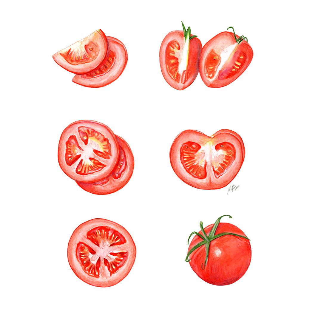 Different Ways To Slice A Tomato Mixed Media Illustration On Canson Imagine Paper C Miriam Figuera Food Illustration Design Food Illustrations Fruits Drawing