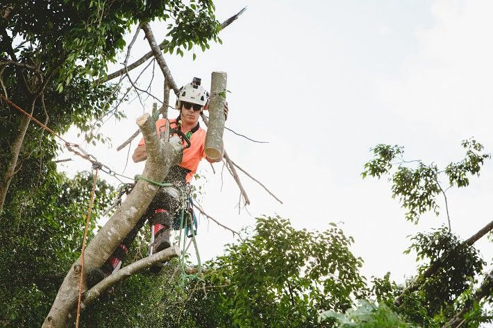 Main Points To Consider While Looking For Tree Removal Service Tree Removal Service Tree Removal Removal Services