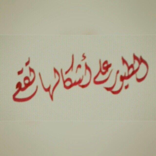 الطيور على أشكالها تقع Calligraphy Arabic Calligraphy Art