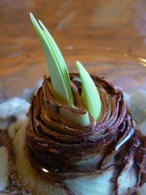 Photo of Amaryllis: Nach der Blüte im Sommer pflegen – Plantura