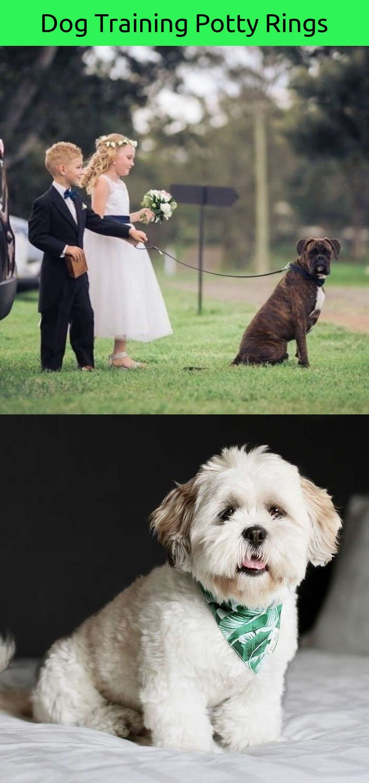 Funny dog instagram accounts dog memes pinterest dog training