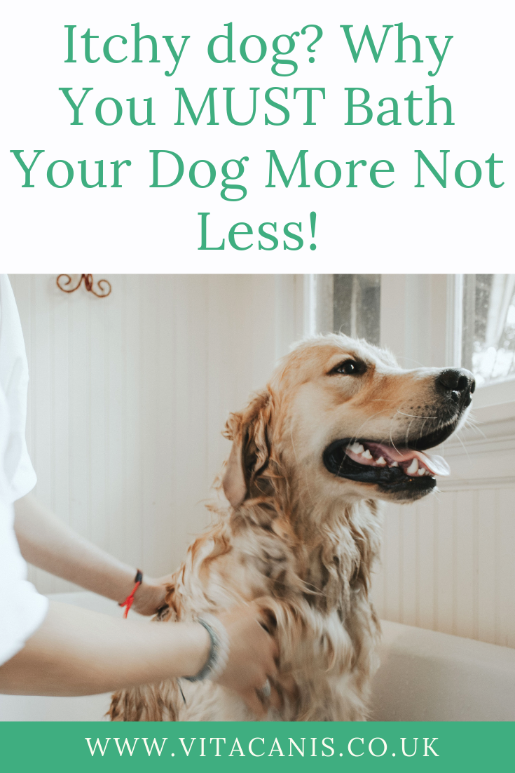 Itchy Dog Why You Must Bath Your Dog More Not Less Vita Canis Itchy Dog Dog Skin Allergies Dog Skin Care