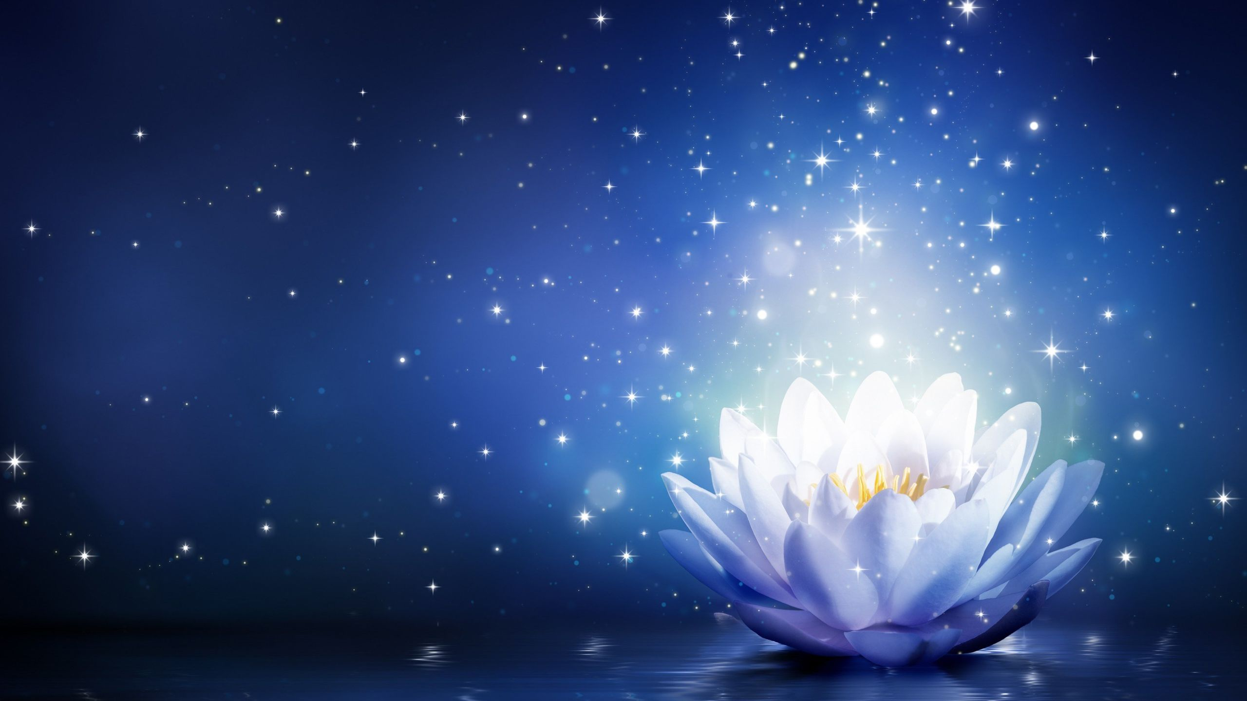Image Result For Images For White Lotus With Transparent