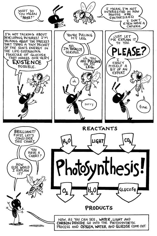 Photosynthesis | Biology Related! | Pinterest | Schule