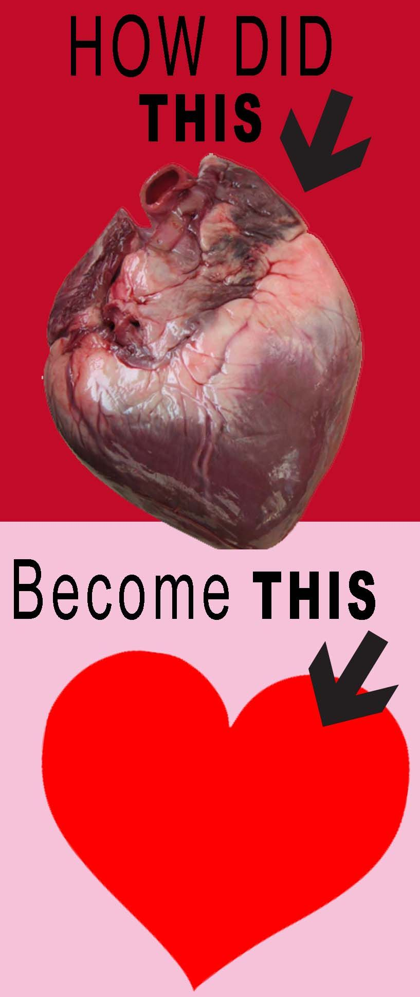 How did the human heart become the symbol of love enjoy a quick how did the human heart become the symbol of love enjoy a quick bit of biocorpaavc Images