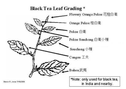 Tea Chronicles What Is Orange Pekoe Tea Orange Pekoe Tea Black Tea Leaves Black Tea