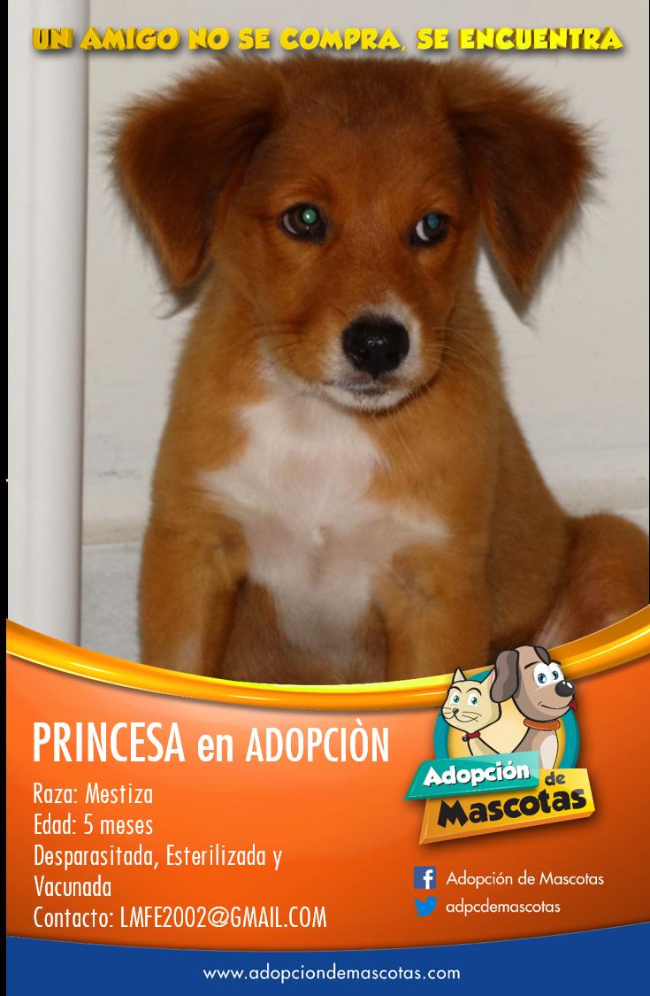 Princesa, hermosa cachorra mestiza de 5 meses en adopción en Valencia, Edo Carabobo, Venezuela