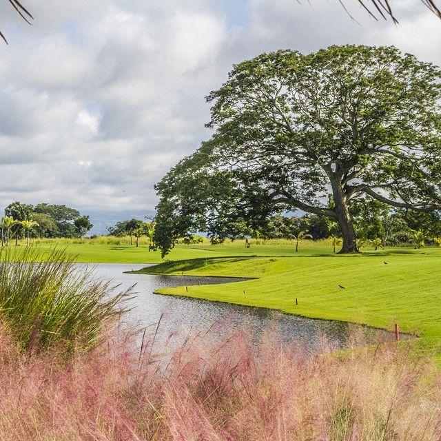 """@buenaventuragc's photo: """"- Nicklaus Design Golf Course -  Nowhere in the region will the golf experience be like in Buenaventura. ---- En ninguna parte de la región la experiencia de golf será como en Buenaventura.  #BuenaventuraGolfClub #Panamá #NicklausDesign #golfcourse #golf #instaoftheday #club @buenaventuraresort"""""""