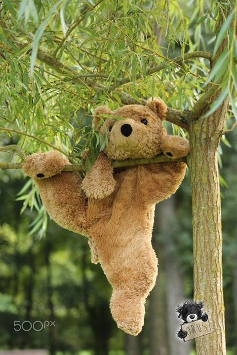 Climb a tree, like a real bear they said. It'll be fun they said. #babyteddybear