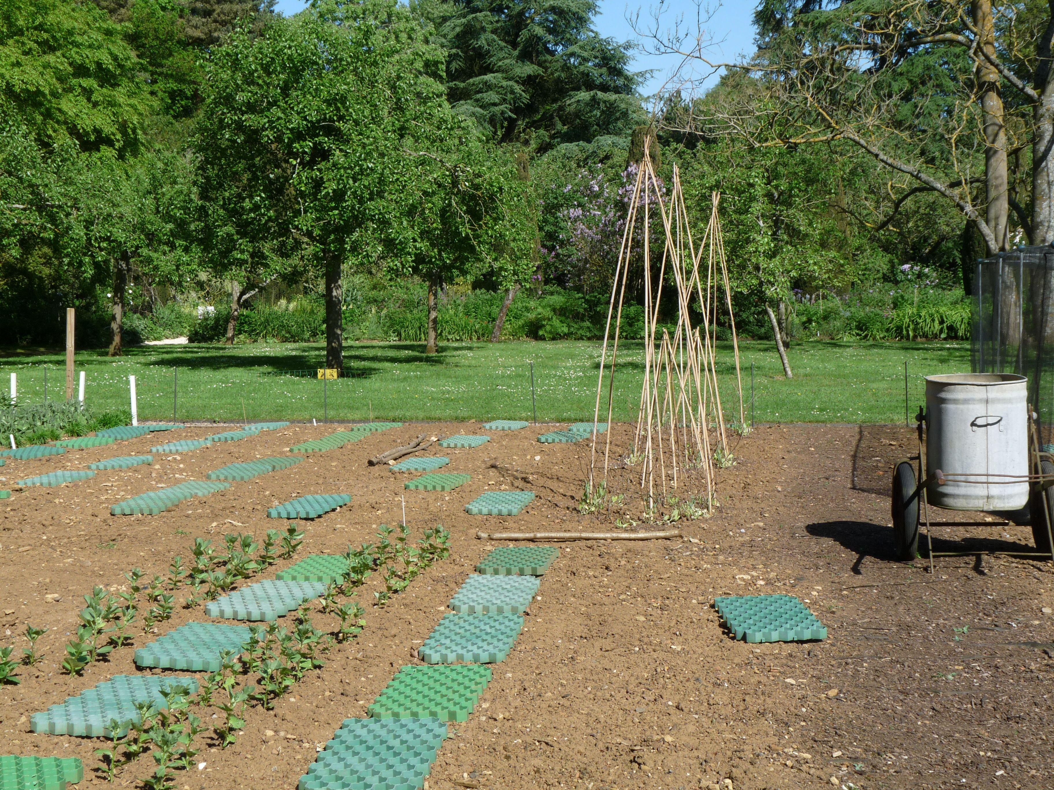 vegetable garden in work.....♔...