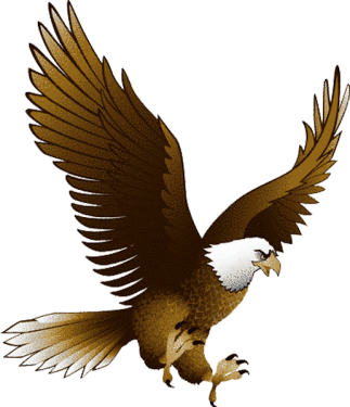 Bald Eagle Png Vector