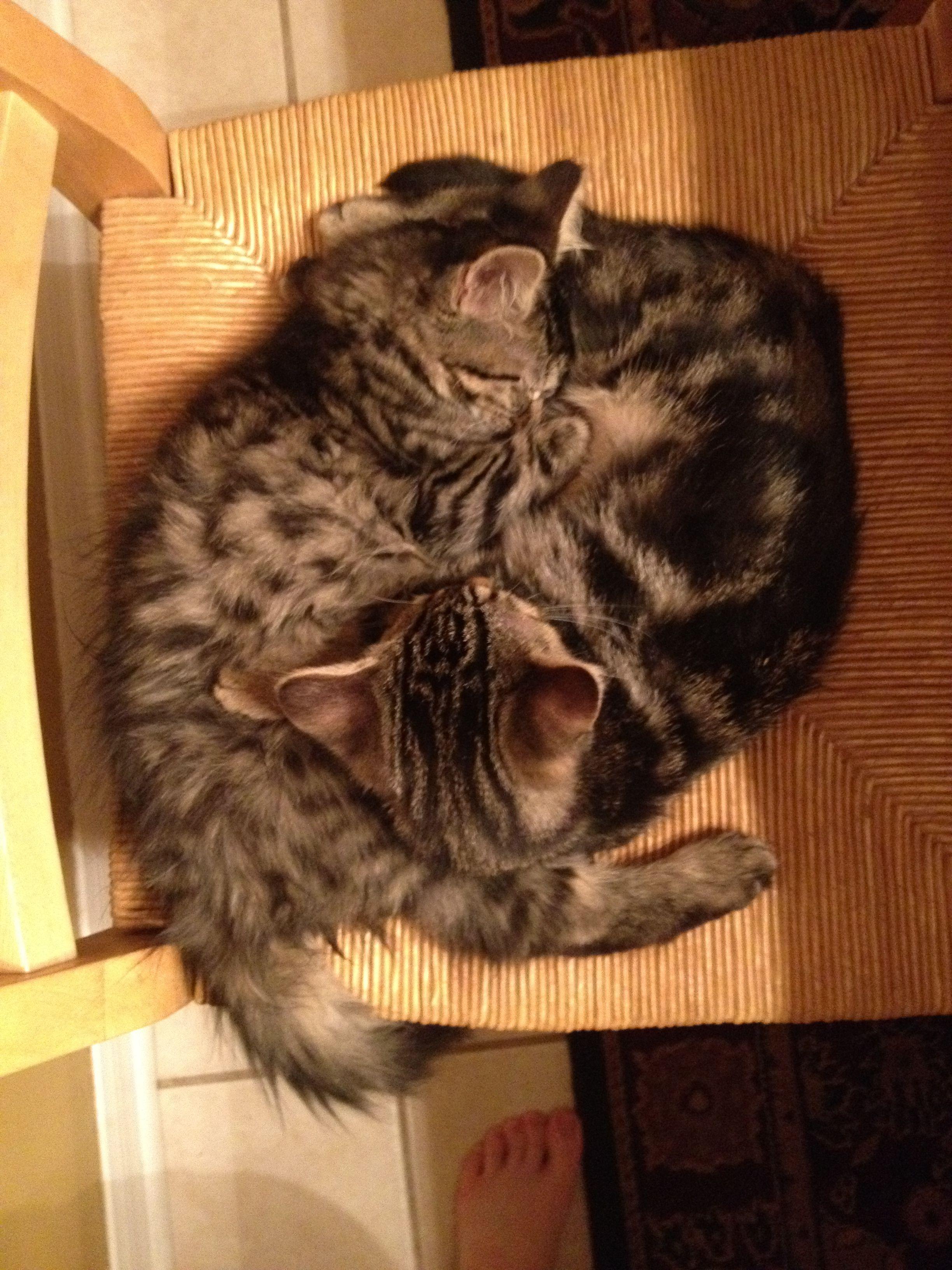 Kittens Sleeping Kitten Baby Cats Cute Little Kittens
