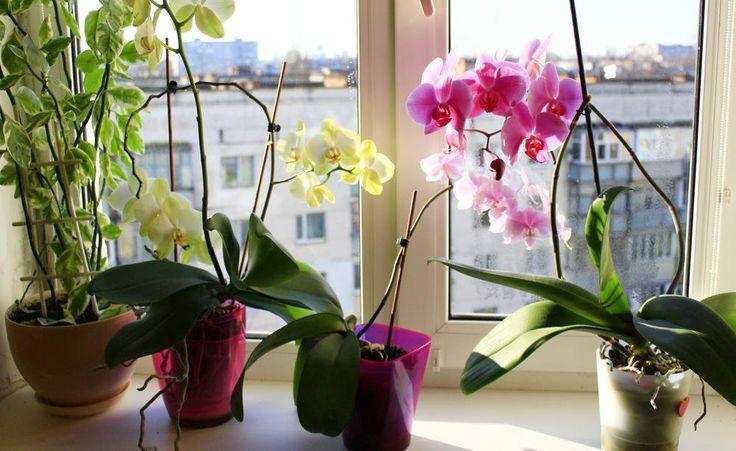Orchideen: Die häufigsten Krankheiten und Schädlinge   - Orchideen Pflege... - #die #häufigsten #Krankheiten #Orchideen #Pflege #Schädlinge #und #orchideenpflege