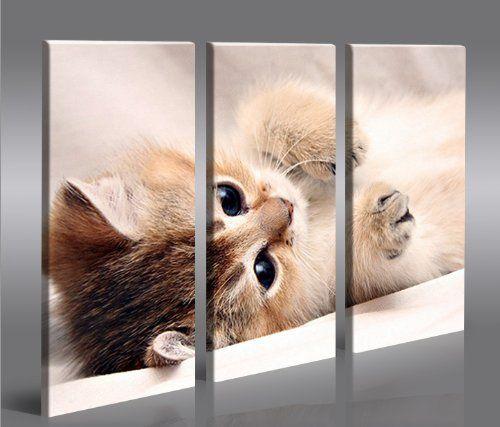 islandburner Bild Bilder auf Leinwand Kitten Kätzchen Katze XXL