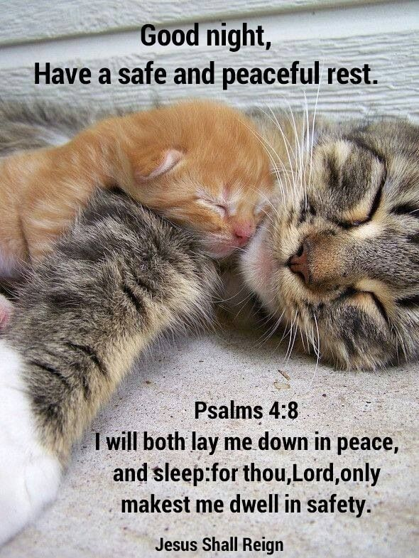 It S Time To Sleep Kittens Cute Baby Animals Cats And Kittens
