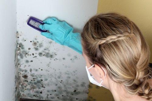 Comment enlever de la moisissure sur un mur ? Dangereuse pour la - comment nettoyer les joints de salle de bain moisi