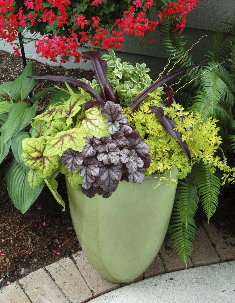 Winter Gardening Perennials In Containers Need Protection Gardens