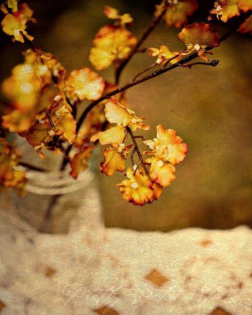 Les 25 meilleures id es de la cat gorie fleurs d 39 automne - Plantes fleuries d automne ...