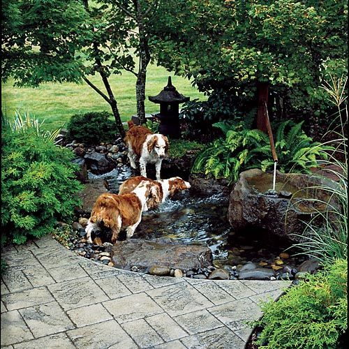 Love Love Love This Every Home Needs A Family Dog They Need To Play Too Dog Friendly Garden Dog Friendly Backyard Dog Yard