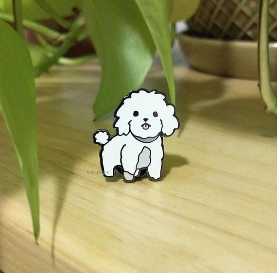 White Toy Poodle, Cute Pins, Poodle