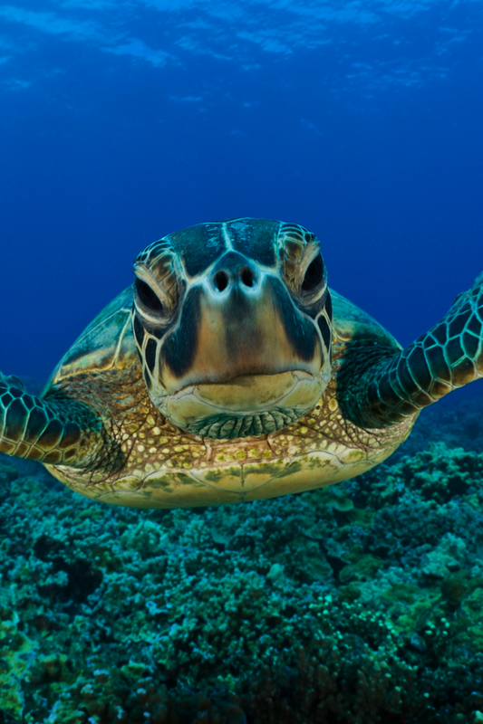 That S A Close Up Sea Turtle Animals Cute Animals
