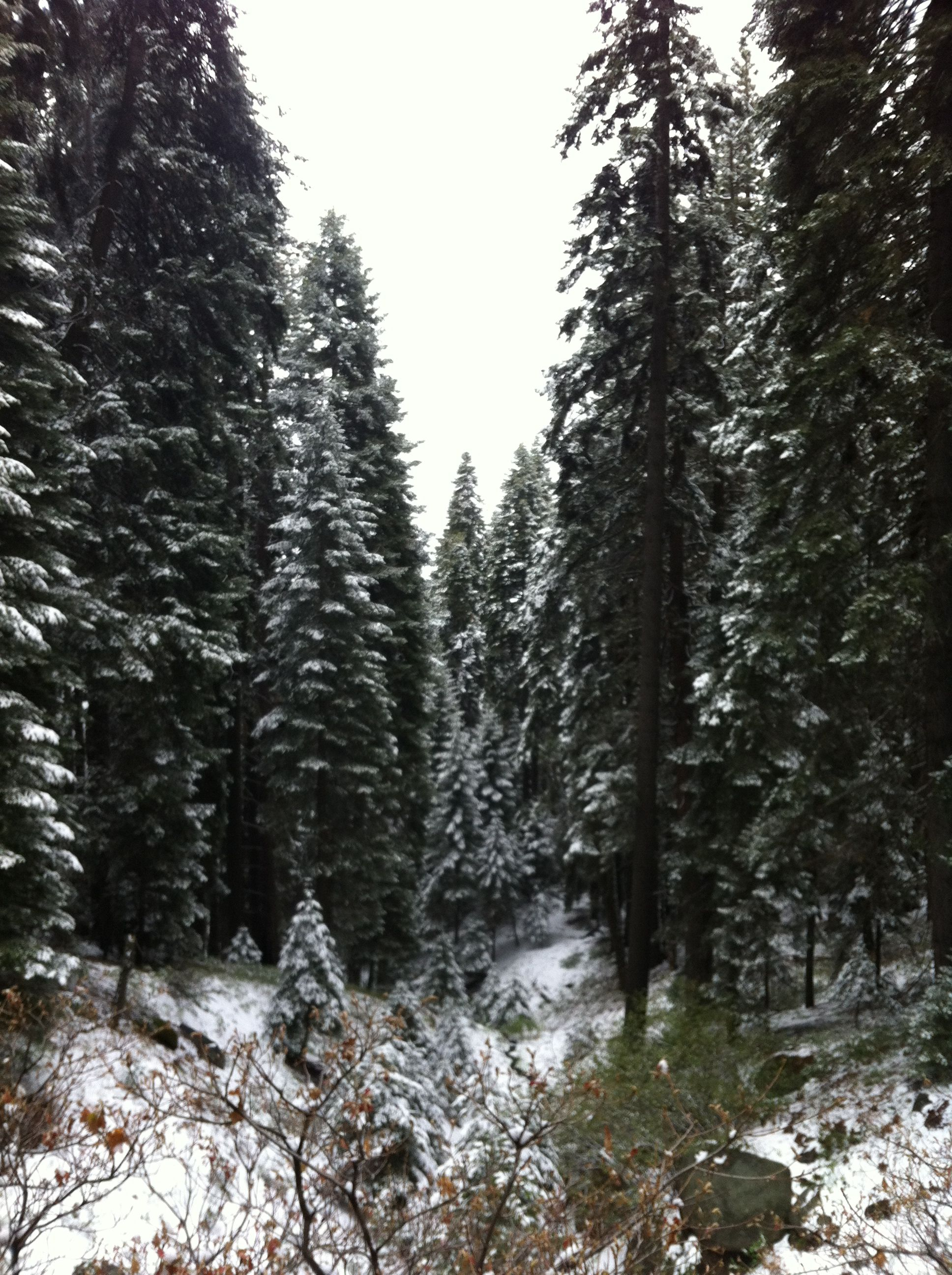 Hiking toward Bear Paw Meadow on Sequoia Outdoor Living id=65599
