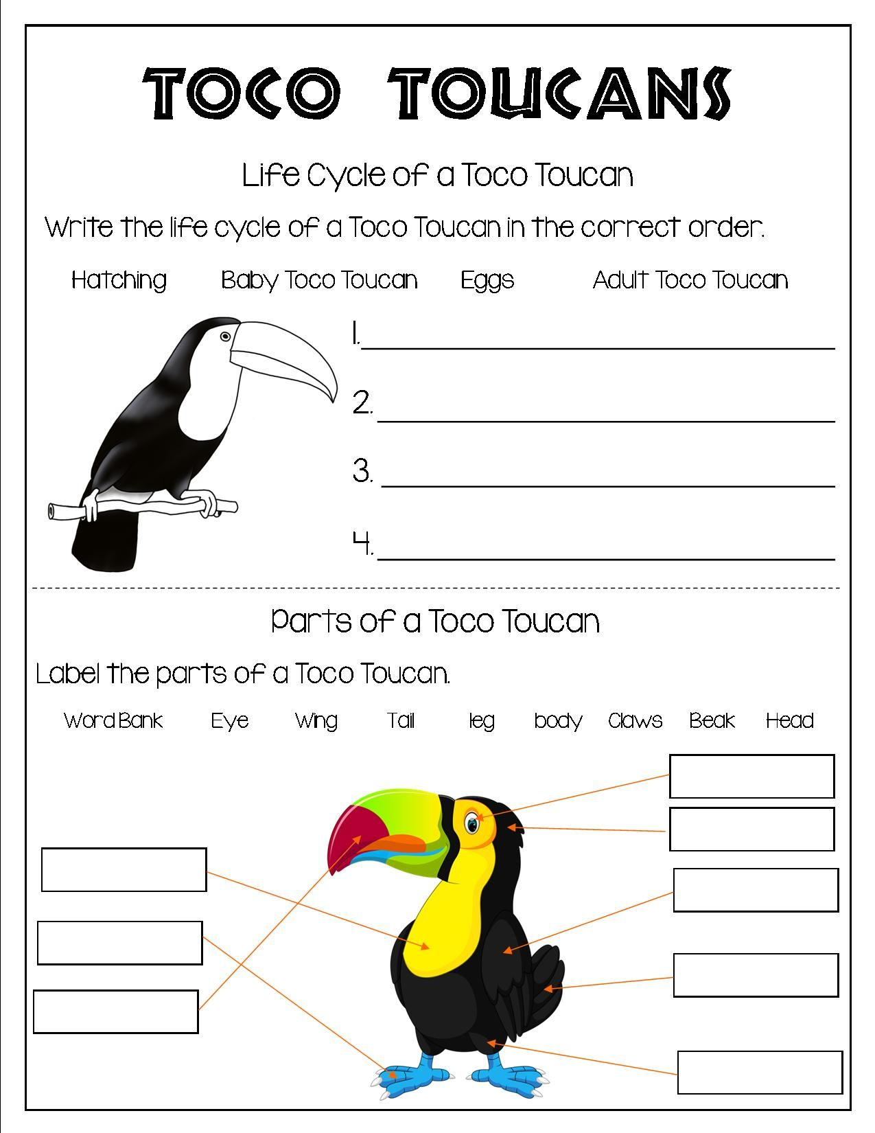 Grade 1 And Grade 2 Students Can Learn About Birds All