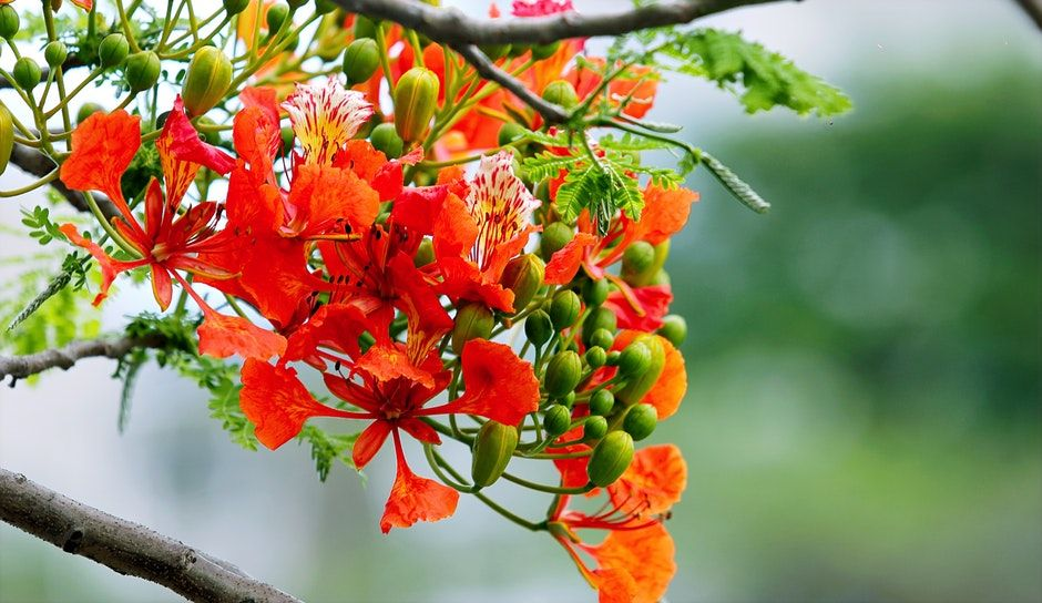 New free stock photo of nature flowers garden