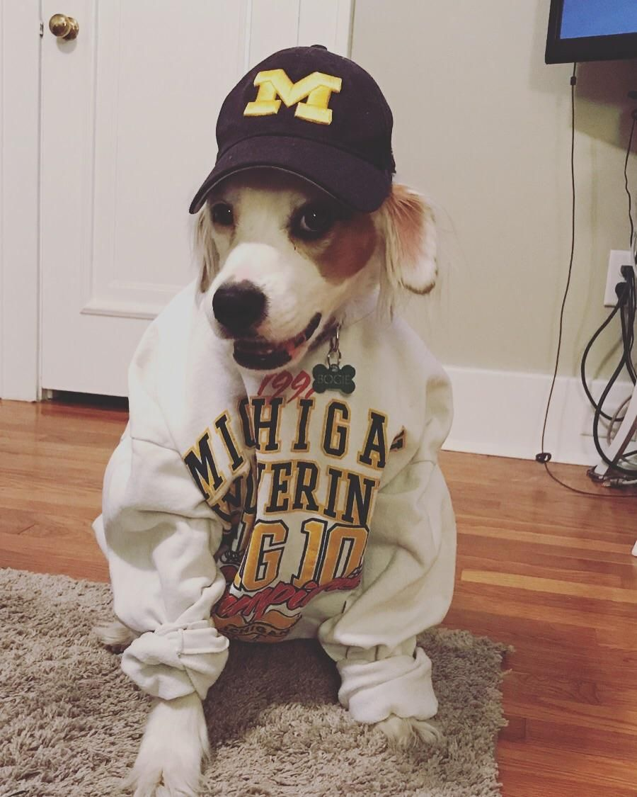 Dog sitting for my friend whos a michigan state fan ift