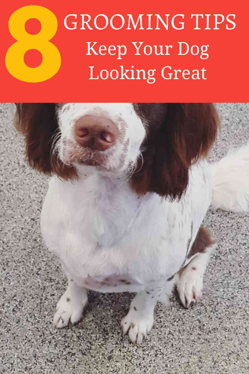 Grooming Your Dog At Home Dog Grooming Happy Dog Grooming Dogs