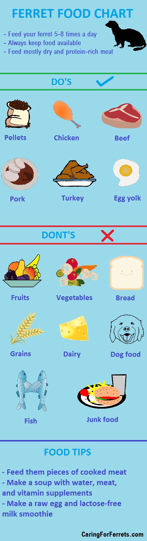 What do ferrets eat ferret food chart ferret ideas ferret pet
