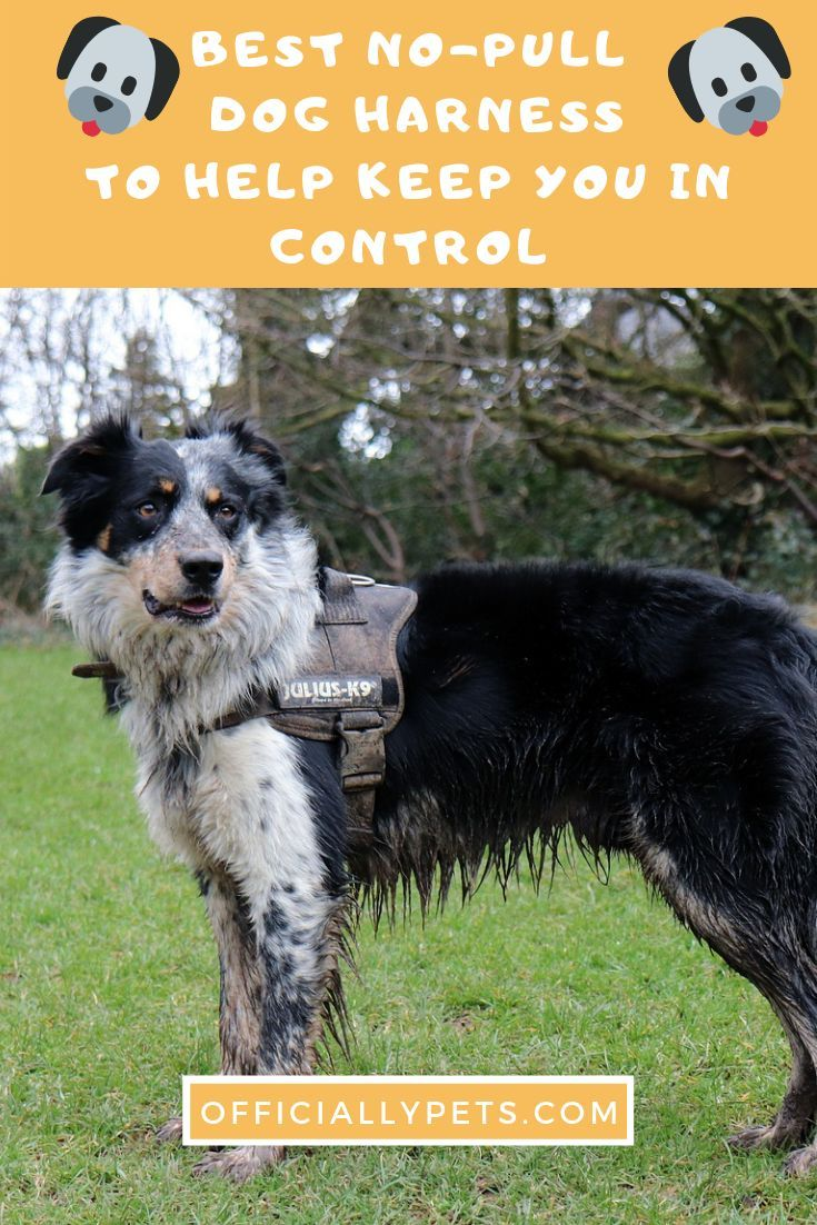 The Best No Pull Dog Harness To Help Keep You In Control Does