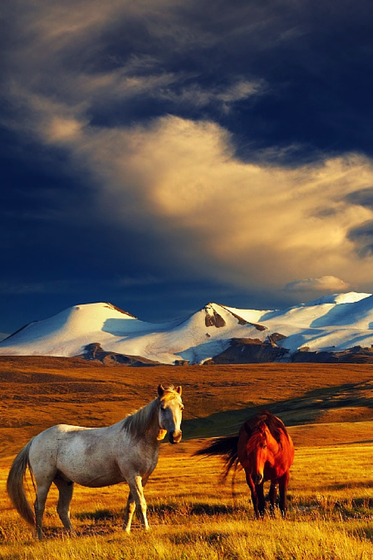 Travel Destination Finder | Awesome Views | Horses ...
