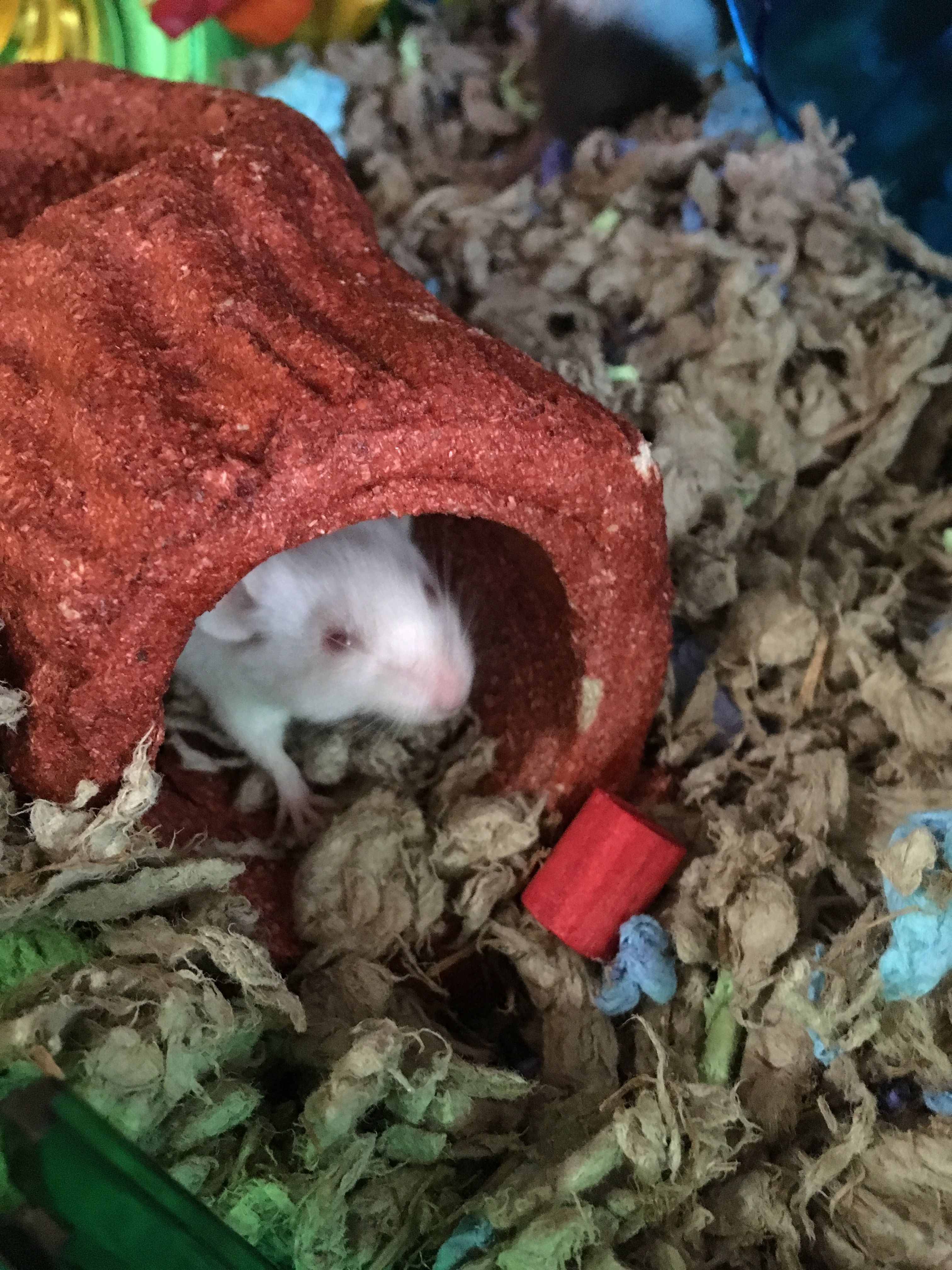 New To Mice! 1fa50116ef73319e48ff01a950972861