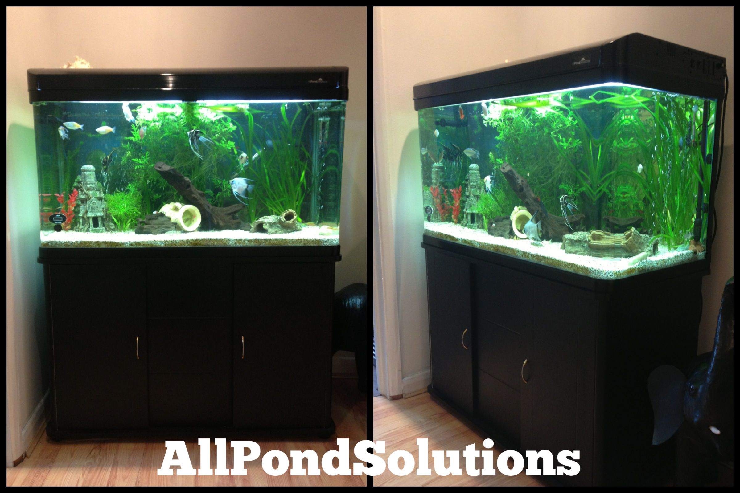 jason 39 s stunning 100cm cabinet tank from all pond. Black Bedroom Furniture Sets. Home Design Ideas