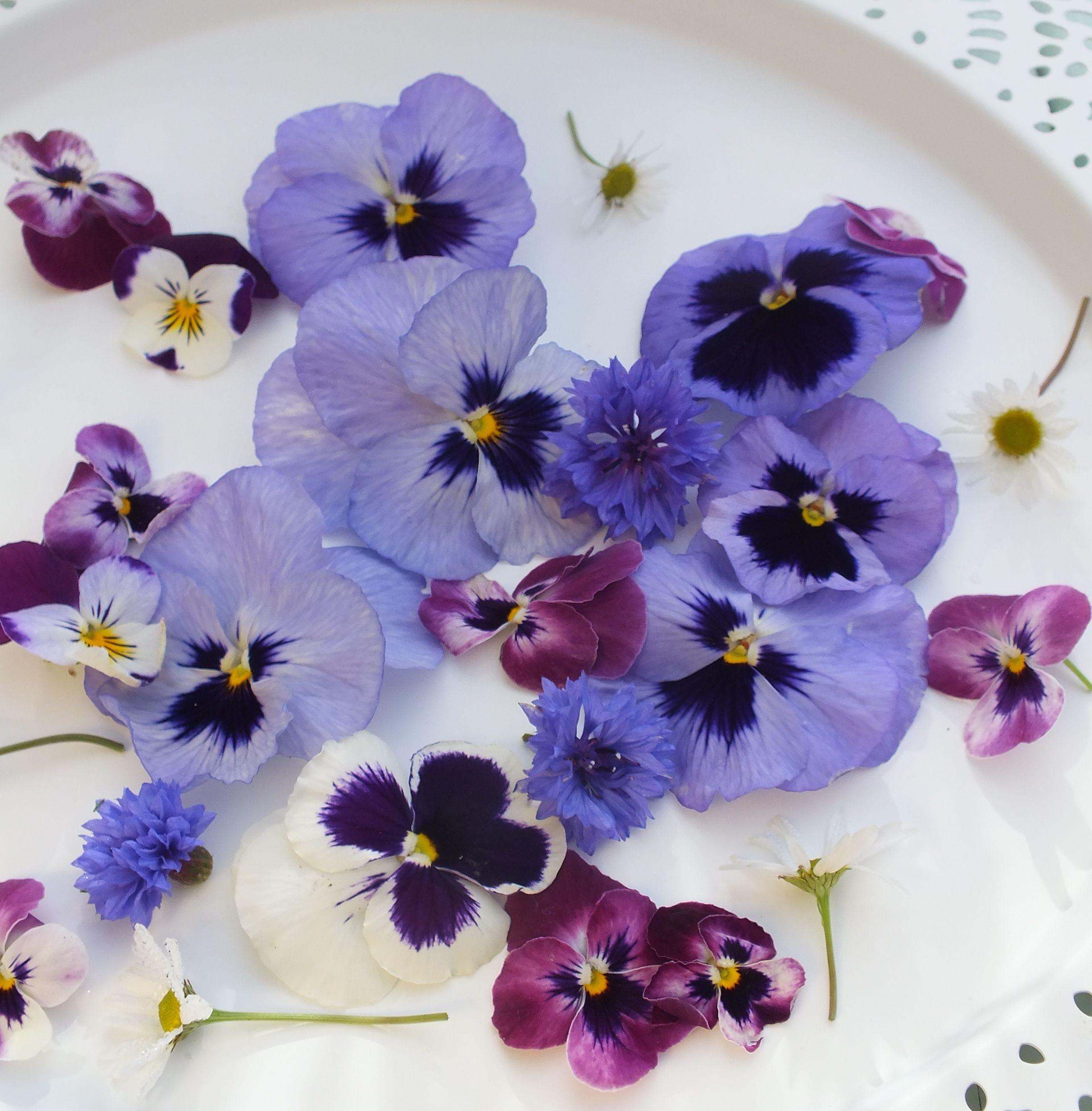 Pin By Wendalina Go On Violas Pansies Maddocks Farm Organics Growing Using Organic Edible Flowers Edible Flowers Pansies Flowers