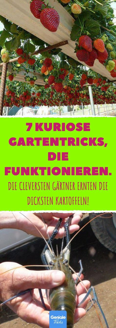 Photo of 7 kuriose Gartentricks, die funktionieren.