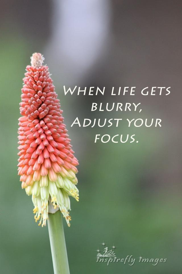 focus inspire flower tritoma hot flower nature