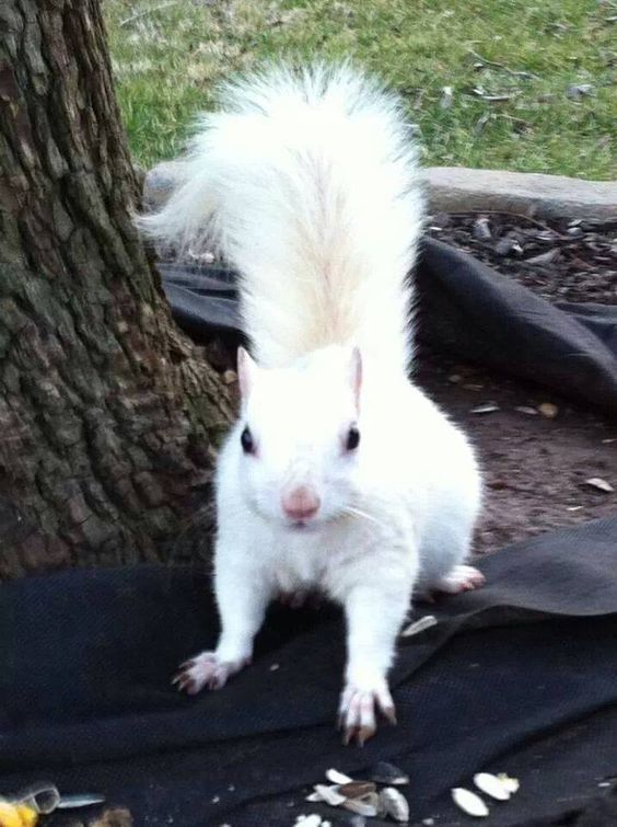 Photo of Squirrel | Pet |Characteristics,Pictures,Feeding and Other Information | Small Pets