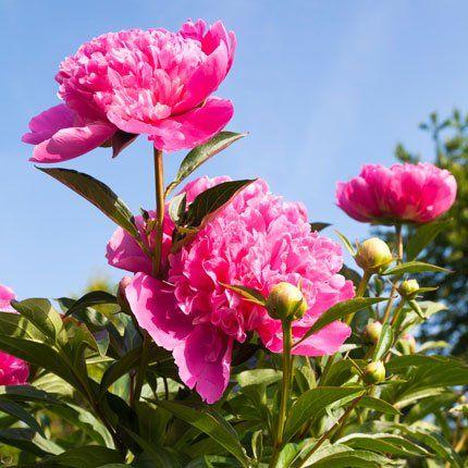 Calendrier du jardinage et des plantations, mois par mois ...