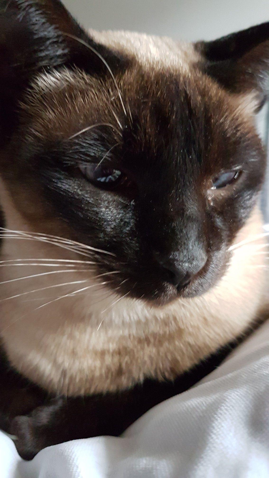 Pin by shiela hancock on Cats, cats, more cats! Cats