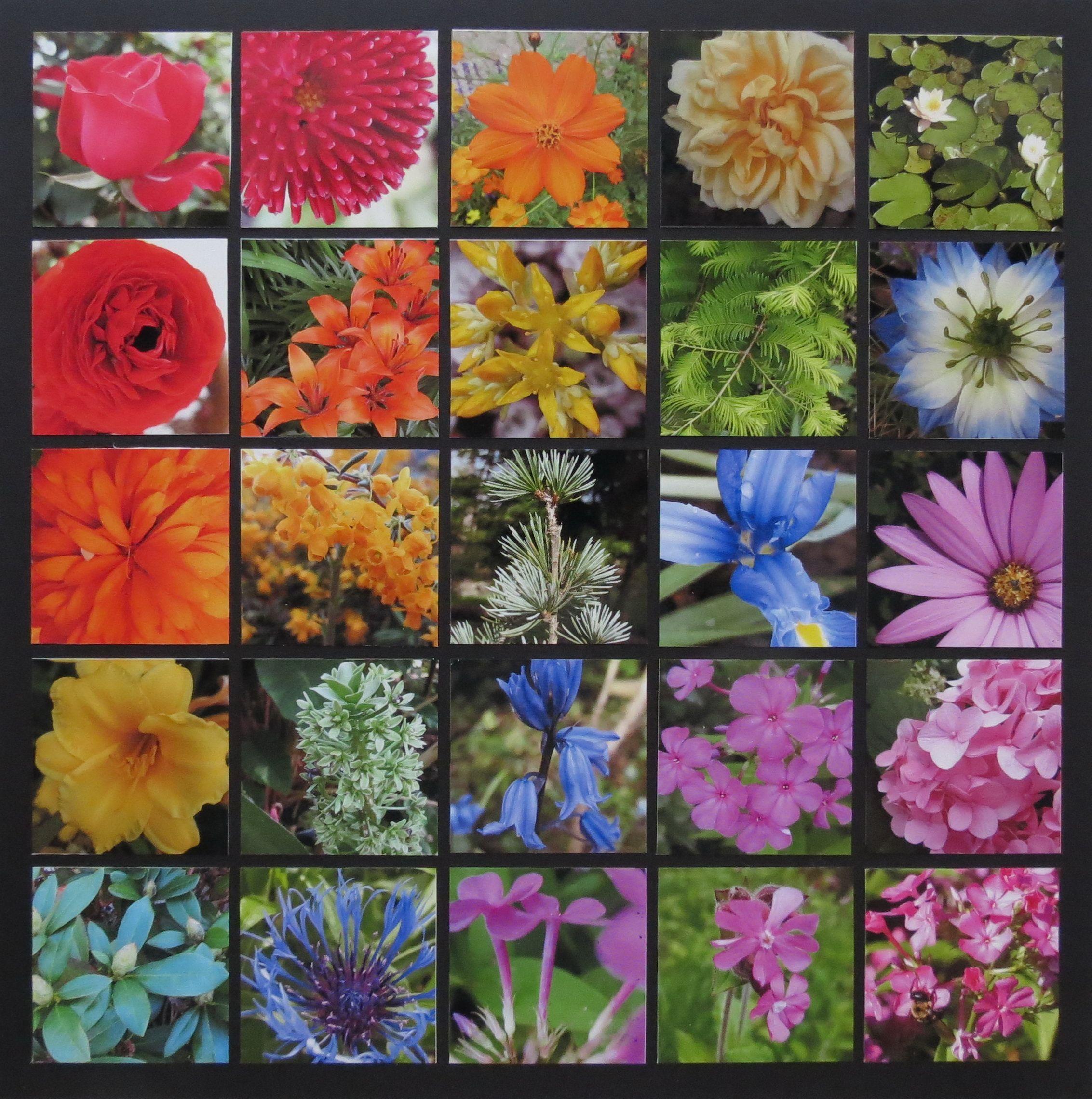 Scrapbook ideas rainbow - Garden Rainbow Scrapbook Com