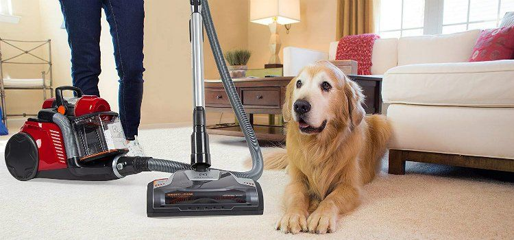 The Best Vacuum For Pet Hair Here Are The Top 5 Best Vacuum Best Canister Vacuum Pet Hair Vacuum Cleaner