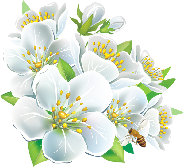 Large White Flowers Png Clipart Flower Clipart White Flower Png Watercolor Flowers