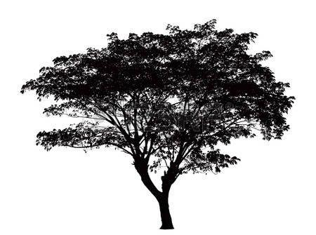 ramas de arboles blanco y negro silueta del rbol