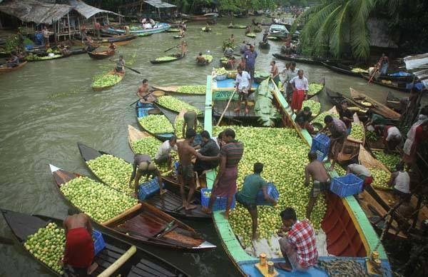 jhalakathi-swarupkathi-guava-market-barisal   GolpoBuzz