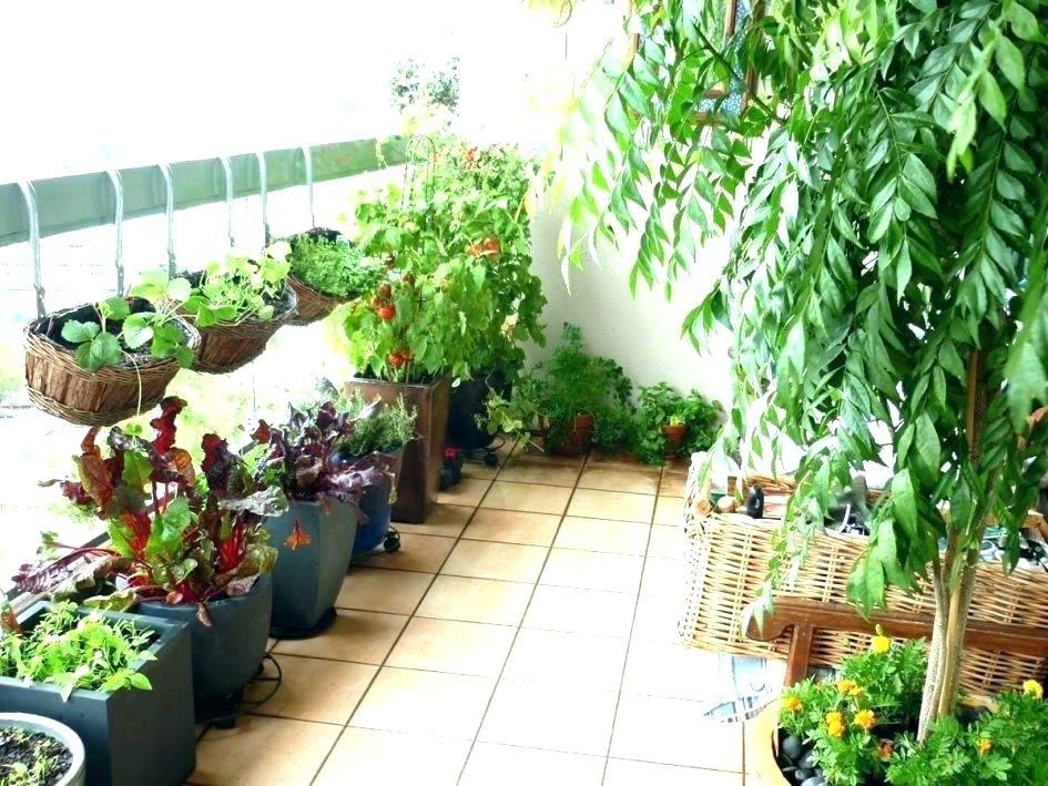 Kitchen Garden Ideas In Balcony Small Balcony Garden Herb Garden Pots Apartment Balcony Garden