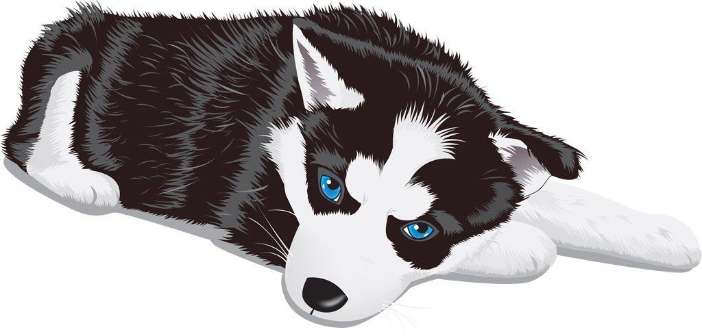フリーイラスト素材 クリップアート シベリアンハスキー 犬 イヌ