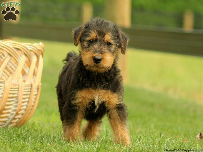 Santa Paws! | Best puppies, Santa paws, Dog love